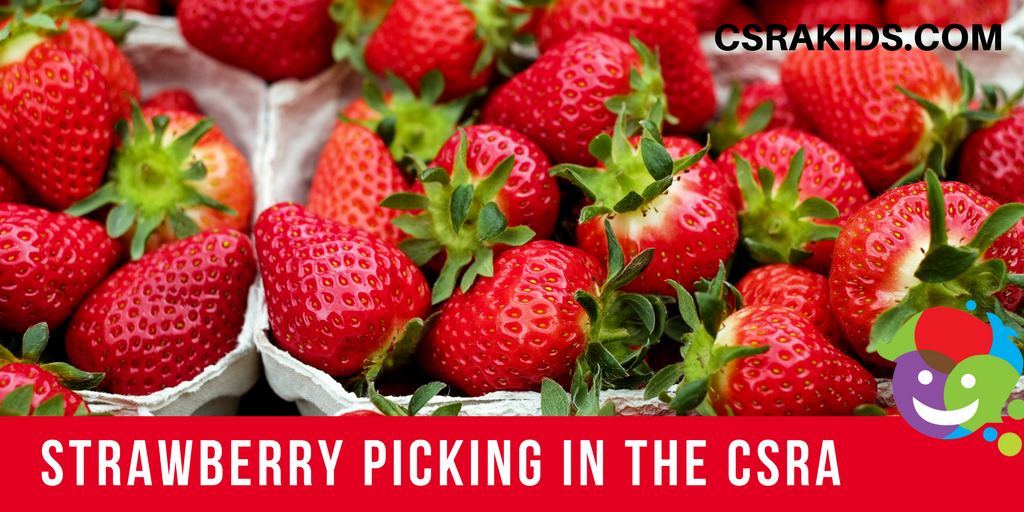 Strawberry Picking in the CSRA