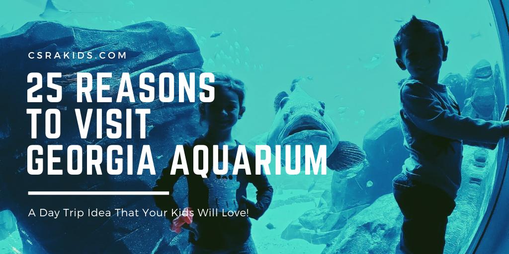 25 Reasons To Visit Georgia Aquarium