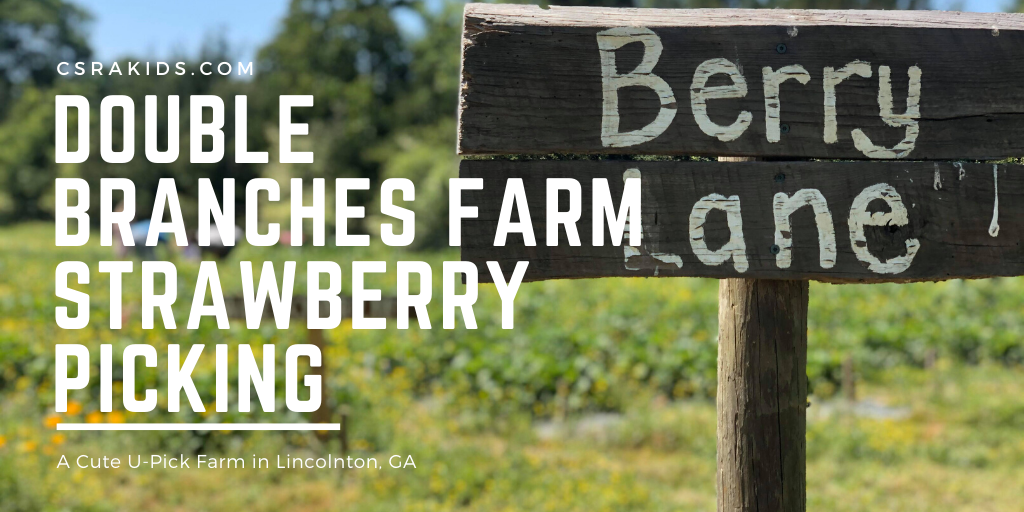 Strawberry Picking at Double Branches Farm