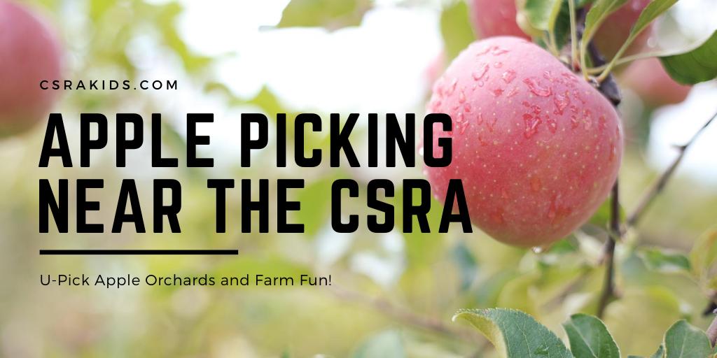 Apple Picking Near the CSRA